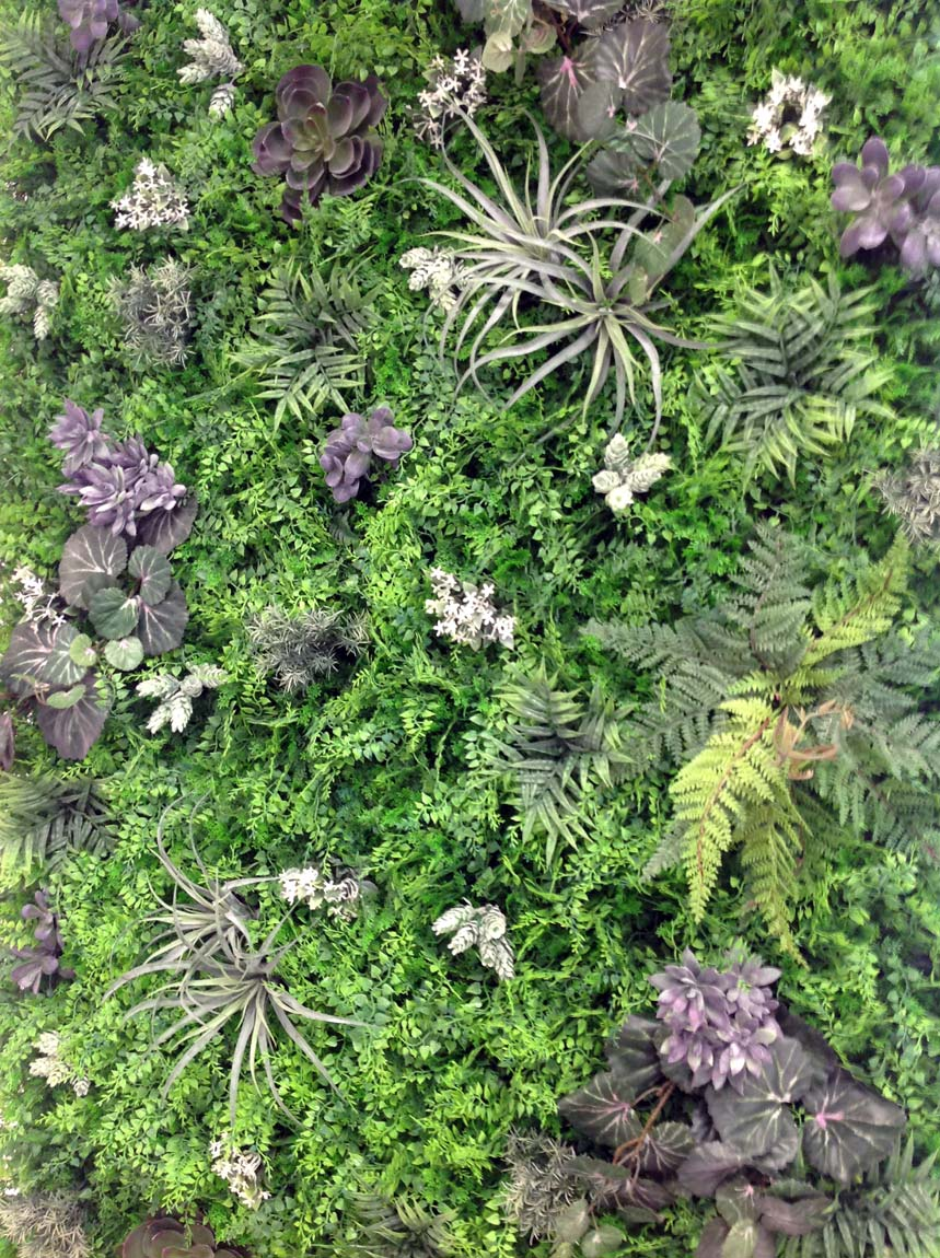 Plantes Pour Mur Végétal Extérieur mur végétal et murs végétaux artificiels - histoire d'eau