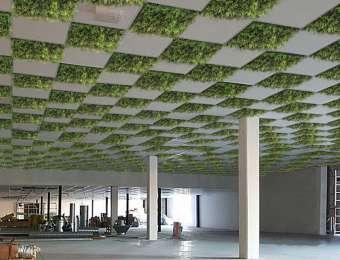 Plafond végétalisé